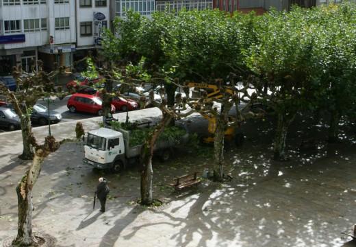 Cambio de imaxe para as árbores da Alameda