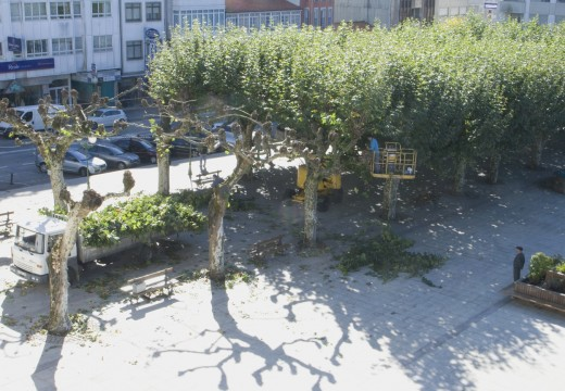 O  Concello inicia os traballos de poda no seu casco urbano