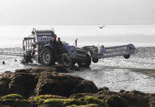 Desde o ano 2010 recuperáronse máis de 8 millóns de metros cadrados de bancos marisqueiros con perda de produtividade