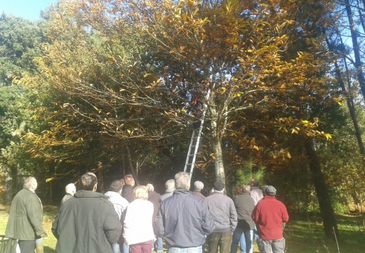Remata o curso de Castañicultura de Lousame cunha sesión práctica de poda de castiñeiros e de cociña con castañas