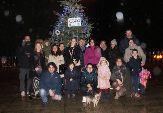 Membros da asociación 'Amigos da canceira de Ordes' instalan a súa árbore de Nadal na Alameda de Ordes
