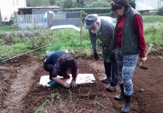 Cambre organiza un curso práctico sobre cultivo ecolóxico