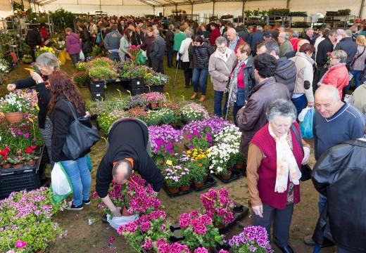 A Feira da Plantación de San Sadurniño ofrecerá este domingo varias actividades paralelas