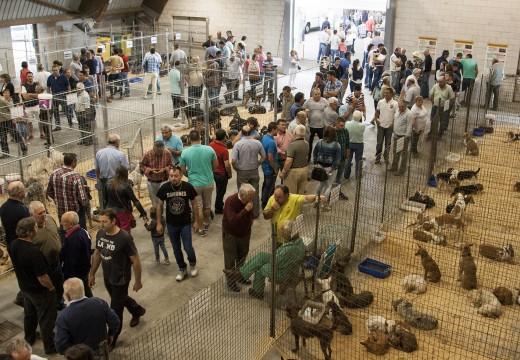 O Mesón do Vento sitúa a súa Feira de Cans de Caza como cita ineludible para o sector cinexético