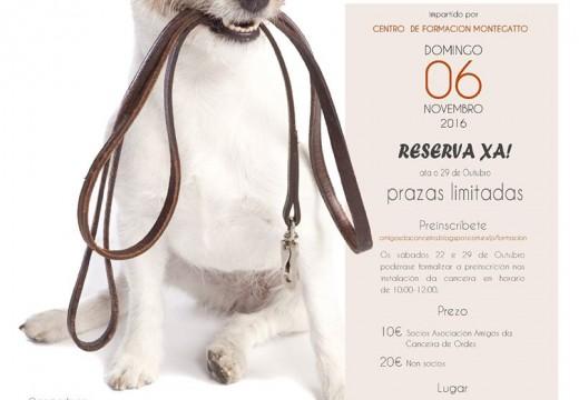 Curso teórico-práctico de adestramento canino