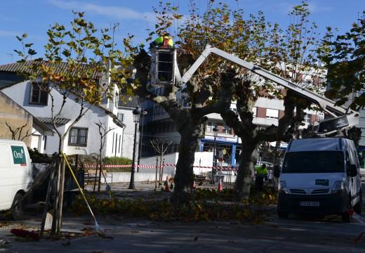 O Concello poda os árbores do Campo da Feira
