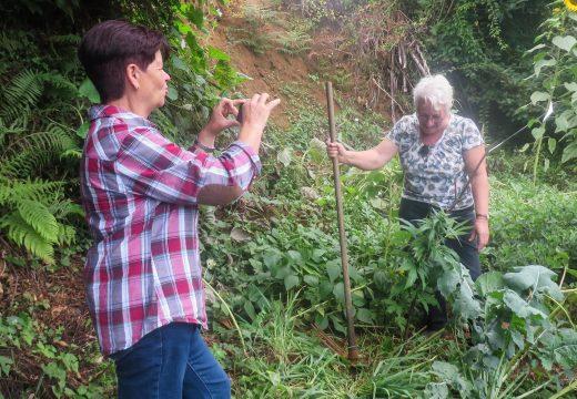 As hortas de San Sadurniño seguen medrando