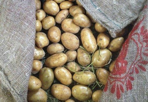 A Xunta declara a corentena  para os patacais de case toda a comarca por mor da couza guatemalteca