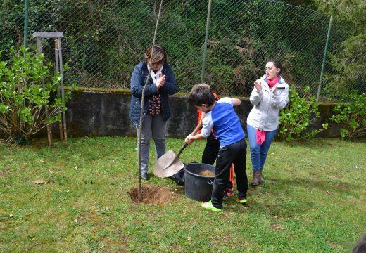 Educación organiza polo Día da Árbore a prantación de varias especies nos CEIP