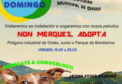 III Festa dos cans, este domingo na canceira de Ordes