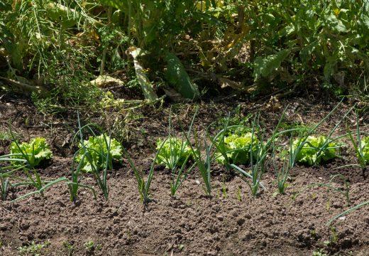 San Sadurniño debaterá o sábado sobre a viabilidade das hortas como modelo produtivo