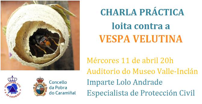 Charla sobre a vespa asiática no Museo Valle-Inclán