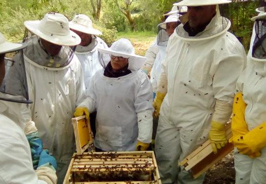 A Casa do Mel organiza un curso gratuíto de iniciación á apicultura en colaboración co Concello de San Sadurniño
