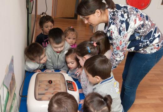 As nenas e nenos da Rolada axudan a criar galiñas de Mos