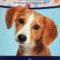 O Concello de Noia porá en marcha unha campaña de control do microchip de identificación dos cans no mes de xuño