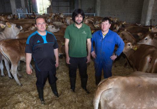 O proxecto gandeiro da Cooperativa Agraria Provincial da Coruña empeza a tomar forma en Santa Mariña