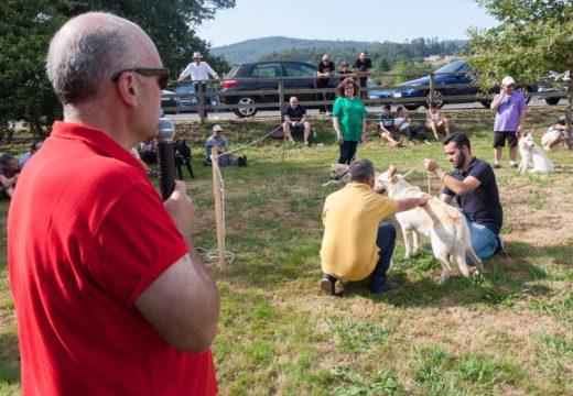 Cans e cabalos, protagonistas dunha parte da Feira Rural deste sábado en San Sadurniño