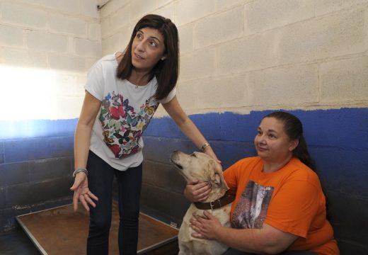 A Nova Lei de Benestar animal duplicou o número de inscricións no Rexistro Galego de Identificación de Animais de Compañía
