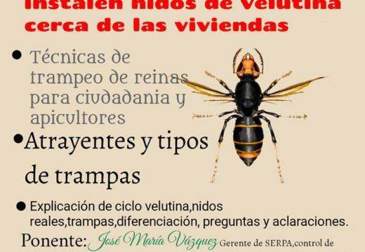 Touro colocará esta primaveira 300 trampas xeolocalizadas en todo o Concello para combater a vespa velutina