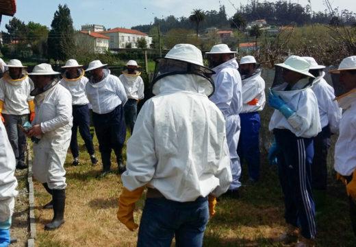 O Concello de San Sadurniño e a Casa do Mel ofrecen un curso de iniciación á apicultura durante o mes de maio