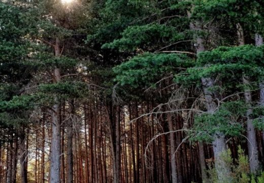 A Deputación da Coruña súmase ao proxecto interrexional de prevención de incendios forestais GEFRECON