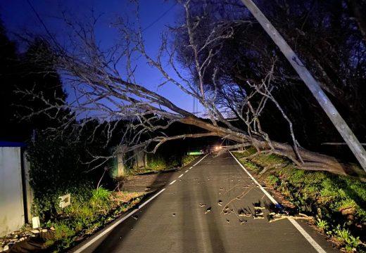 O GES de Brión leva retiradas catro árbores caídas en Ames e Brión nas últimas 24 horas por mor dos fortes ventos