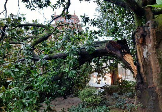 Cae unha rama de máis de 3 toneladas dun dos magnolios dos xardíns Felipe de Castro