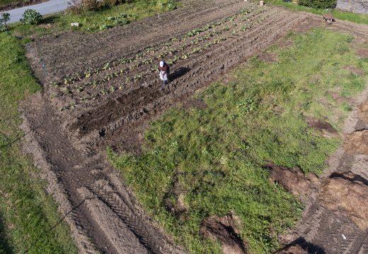 Medio Rural aclara o asunto dos desprazamentos para atender hortas