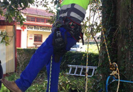 O obradoiro de emprego Lousame-Noia de aproveitamentos forestais continúa coa atención formativa do alumnado