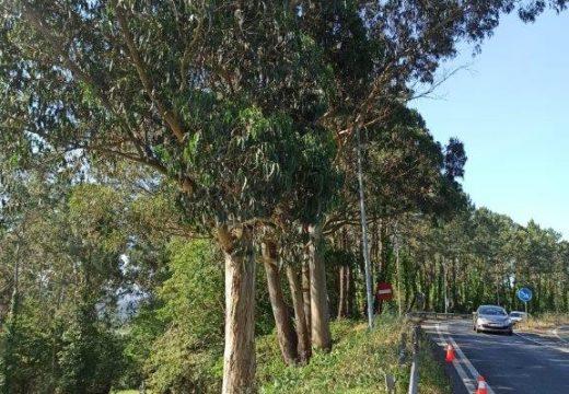 A Xunta executará a vindeira semana traballos de roza e limpeza nas marxes de estradas autonómicas nas comarcas de Noia, Fisterra, A Mariña, Vigo e Baixo Miño