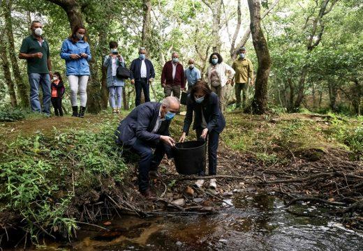 Media Ambiente realiza unha solta de 100 troitas no Couto de Verdes para contrubuír a preservar o ecosistema no río Anllóns