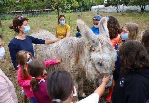 O campamento xuvenil «Saborea a vida do rural» de Vilasantar promove o contacto coa natureza entre a xuventude