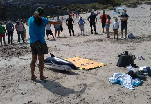 Faladoiro sobre tartarugas e mamíferos mariños de Galicia