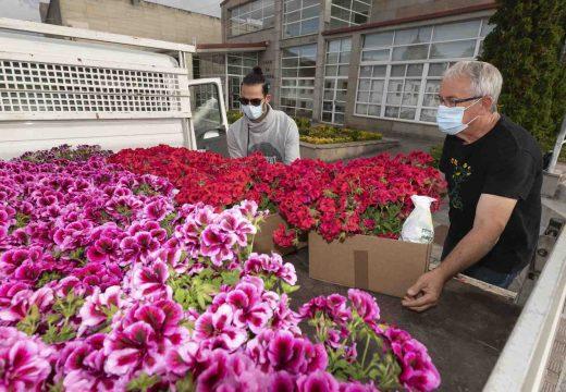 San Sadurniño xa está dentro de «Vilas en flor»