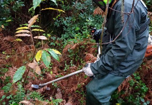 A Xunta realiza traballos de conservación e limpeza nos treitos interurbanos do Rego de Oza e os ríos Monte Neme e Barcia no concello de Carballo